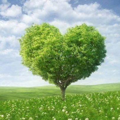 长青树重大疾病保险